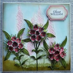 Sweet William | Perfect Partners | Victorian Floral | SD-PPMD-WILL | CardCraft-UK