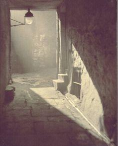 A Passage Between Tall La