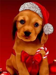 Marcia, Hope you all have a wonderful holiday please tell everyone I said Merry Christmas and I send my love ♡ Merry Christmas, Christmas Scenes, Christmas Animals, Christmas Dog, Christmas Pictures, All Things Christmas, Vintage Christmas, Christmas Holidays, Christmas Cards