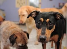 Tips on how to be a good foster parent and help dogs in need!