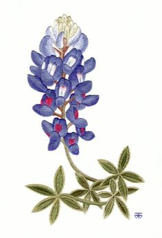 Blue Bonnet Flower Needle Painting Embroidery