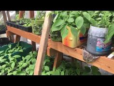 Gardens provides Gardeners like you information on Greenhouse and Greenhouse ideas, you can get an early start or extend your growing season. Kinds Of Vegetables, Organic Vegetables, Veg Garden, Garden Tips, House Plants Decor, Plant Decor, Epsom Salt For Plants, Homemade Plant Food, Egg Shells In Garden