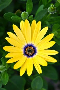 Canmore Alberta Day 1 PhotoChics African Daisy The post Canmore Alberta Day 1 PhotoChics appeared first on Diy Flowers. Amazing Flowers, My Flower, Yellow Flowers, Beautiful Flowers, Cactus Flower, Exotic Flowers, Beautiful Gorgeous, Fresh Flowers, Spring Flowers
