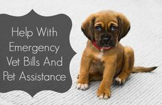 Help With Emergency Vet Bills And Pet Assistance Pet Dogs, Dog Cat, Pets, Vet Help, Emergency Vet, Best Online Shopping Sites, Medical Help, Pet Care Tips, Dogs Of The World