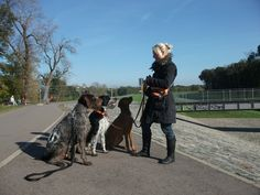 4 Hunde...   Pawshake Leipzig