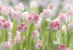 Spring ✿⊱╮