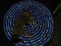 Knitting string lights into your rug will add a romantic ambiance to your place, and  your puppy will enjoy too! http://www.flashingblinkylights.com/light-up-products/light-up-decorations/led-string-lights.html