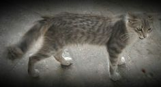 Lionard, un beau intelligent et courageux chat que j ai rencontre dans la gare routiere ..