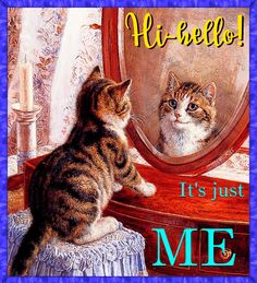 Free online It'S Just Me ecards on Pets Kittens Cutest, Cats And Kittens, Cute Cats, Funny Cats, Fabric Panel Quilts, Cute Good Morning Quotes, Gato Gif, Pugs And Kisses, Foster Kittens