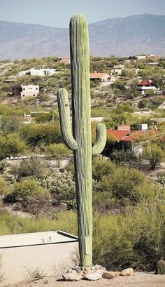 Stealth cell tower: When a saguaro is not a saguaro