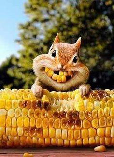 een blije eekhoorn