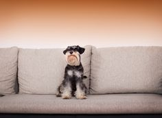 Hundehaare effektiv vom Sofa entfernen - removing dog hair from sofa
