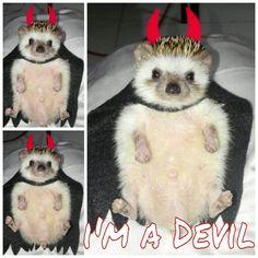 Devil :D