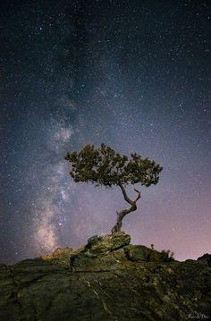 Vertical II by Thrasivoulos Panou on 500px... #galaxy #light #longexposure #milkyway #night #nightphotography #nightscape #rocks #sky #stars #tree