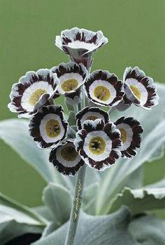 30 cm Crème Pot de fleur planteur en Pastel Couleurs Pour à L/'intérieur Tissé Motif tricoté