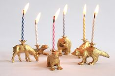 Party animal candles Kit