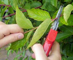 How to prune your plants for spring #garden #spring