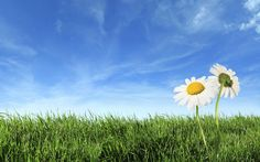 grass-background-with-daisy-flowers.jpg (1920×1200)