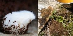 """Use These Easy Home Remedies And You'll Never See Ants Again. It might be tempting to stomp on these annoying critters the second you spot their ant trail, but there are better and more practical ways to send them a """"keep out"""" message. Ants Marching, Ants In House, Get Rid Of Ants, Cheap Trick, First Health, Insect Repellent, How To Get Warm, Home Remedies, Helpful Hints"""