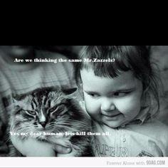 Hahaha cats ^^