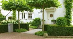 Painted white brick house, topiaries and classic landscaping