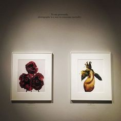 """To me personally, photography is a way to overcome mortality"" #irvingpennquote #irvingpennexhibition #irvingpennphotography #metropolitanmuseumofart #myfavorite #legendary #irvingpenn"