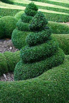 Perfect spirals - Bourton House Gardens