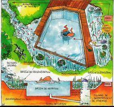 schéma piscine naturelle