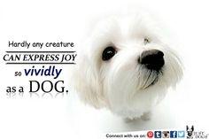 Dogs Give Joy