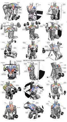 Fitness Motivation : Description Shoulder workouts to target specific muscle. - #Motivation https://madame.tn/fitness-nutrition/motivation/fitness-motivation-shoulder-workouts-to-target-specific-muscle/