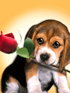 ❤️GIFs ~ Puppy with Rose. Just a little something sweet for Nate.