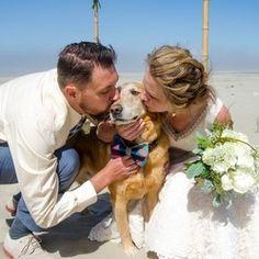 chien témoin de mariage