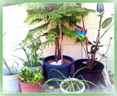 Summering houseplants. All except the pothos are non-toxic to pets and children.