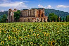 San Galgano Abbey, Province of Siena, Tuscany region Italy