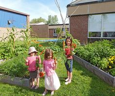School-garden advocates dish on how they get students -- even the picky -- to eat kale, chard, carrots, and other veggies. Plus, find out what it takes to grow food at your kid's school. Healthy Kids, Get Healthy, Green School, Kindergarten Science, Garden Care, Raised Garden Beds, Garden Projects, Kids Learning, Kids Playing