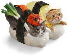 """Sushi thỏi bình thường đã lỗi mốt rồi! Bây giờ là lúc """"Sushi mèo"""" lên ngôi!!! - du hoc nhat ban 2013 - du học nhật bản manabillage"""