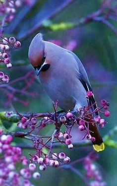Wonderfull bird...