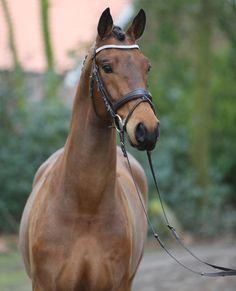 Oldenburg, Breyer Horses, Heartland, Beautiful Horses, Equestrian, Barn, Horses, Animaux, Wild Animals
