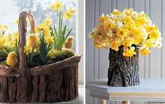 Cheerful yellow daffodils signal the end of winter cold and the return of warmer days.