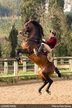 Courbette performed by rider and horse from the Portuguese Riding School