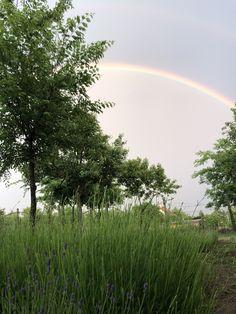 Kallavender & Co. Rainbow, Celestial, Sunset, Outdoor, Sunsets, Outdoors, Rainbows, Rain Bow, Outdoor Games