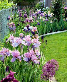 Persian Berry Quot Irises Gardening Tips Jardines Iris Flowers, Planting Flowers, Rare Flowers, Flowers Garden, Beautiful Gardens, Beautiful Flowers, Landscape Design, Garden Design, Iris Garden