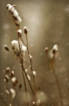 Winter by felicia