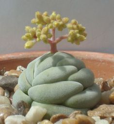 Rare And Unusual Succulent Plants