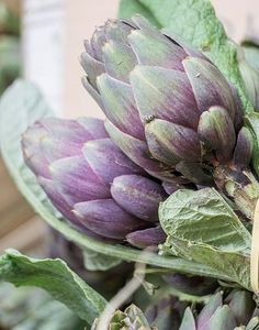 """Nature Photography, Fine Art Print, Wall Art Home Decor, Marketplace """"Artichoke Market Day"""" Lilac, Lavender, Wall Art Prints, Fine Art Prints, Cabbage Roses, Country Farm, Fruit And Veg, Green And Purple, Olive Green"""