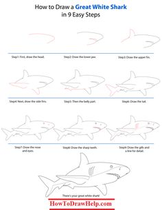 How to draw a great white shark step by step tutorial -- lots of drawing tutorials at www.HowToDrawHelp.com