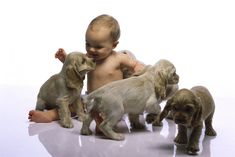 Cómo los perros y los gatos contribuyen a mejorar la salud del bebé