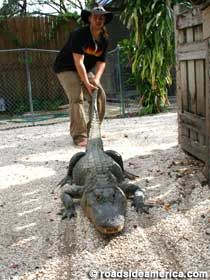 Native Village: Gator Wrestling Seminole Indian Reservation in Hollywood, Florida