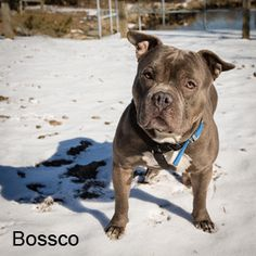 Bossco is located at the Quincy animal shelter  There phone number is 617-376-1349  There located at 56 Broad street  Tuesdays and Thursdays 6:00 pm - 8:00 pm  Fridays 4:00 pm - 6:00 pm  Saturdays 10:00 am - 4:00 pm           Please Adopt Today