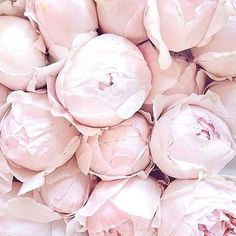 Love the smell of peonies. My absolute favorite flower.